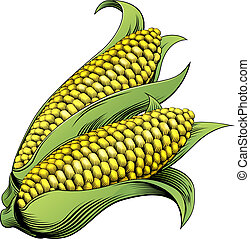 Corn vintage woodcut illustration - A sweet corn maize...