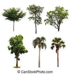 set of tree isolated on white background