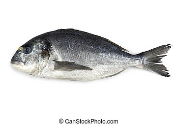 Fresh bream fish isolated, close up