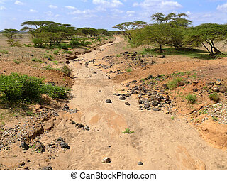 Dry riverbed. Not far away forest. Africa, Kenya.
