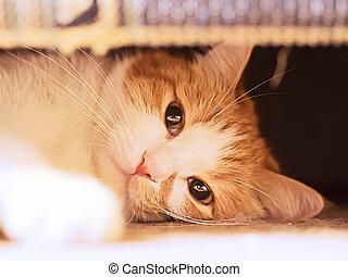 Sad cat - Red sad cat looking