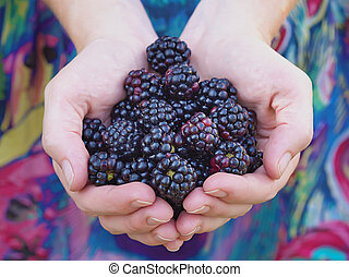 Black raspberries - Hands holding black raspberries