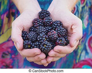 Black raspberries - Hands holding black raspberries