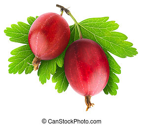 Red gooseberry - Two red gooseberries isolated on white