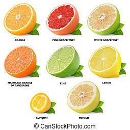 Citrus fruits collection - Collection of citrus fruits...