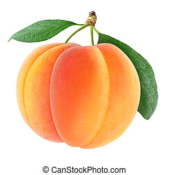 Apricots - Two fresh apricots isolated on white