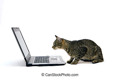 Home cat are surfing on the Internet