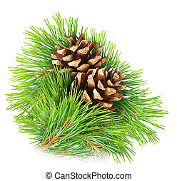 Pine branch with cones isolated on white