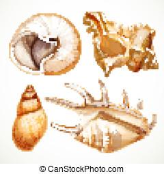 Set realistic seashells isolated on white background 2