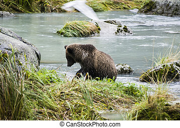Baby Brown Bear Catching A Fish - Animals In The Wild -...