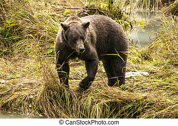 Brown Bear - It Is Time For Lunch! - Brown Bear - Animals In...