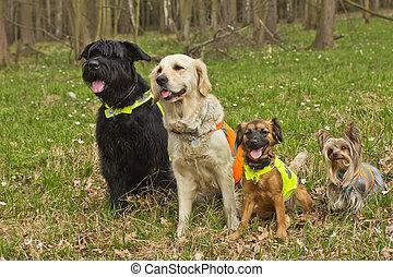 Tragen, weste, Gruppe, hunden, reflektierend