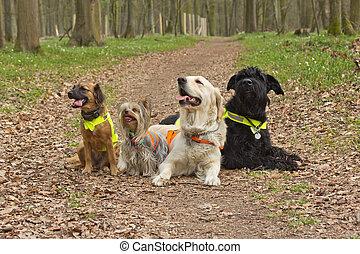 Tragen, Gruppe,  ais, reflektierend, weste, hunden