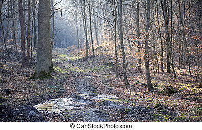 Forest in early spring. Oliwa forests, Poland.