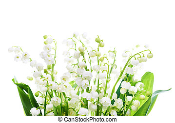 Lilies of the valley - White flowers lilies of the valley...