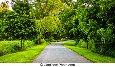 Trees along a road in rural York County, Pennsylvania.