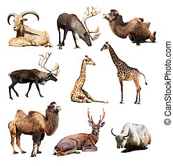 Set of mammal animals over white background with shadows -...