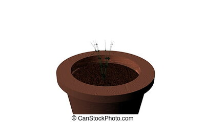Garden Plant Growing in a Pot - 3d Animation of a Flower...