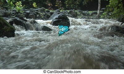 BUTTERFLY AT A WATERFALL - Tranquil Scene of a Waterfall...