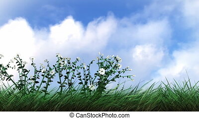 Plants and Flowers Growing - Animation of 3d Plants and...