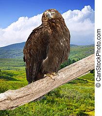 eagle on on wood trunk