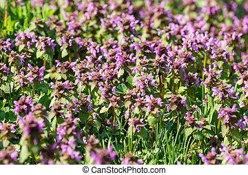 Purple Spring Flowers Field