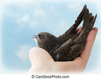 Bird in human hand against blue sky