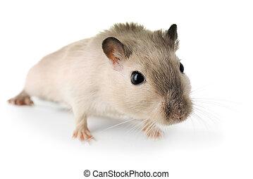 Curious little mouse