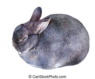 Rabbit. Isolated over white