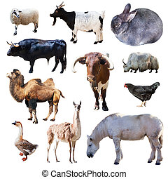 Set of farm animals Isolated on white background