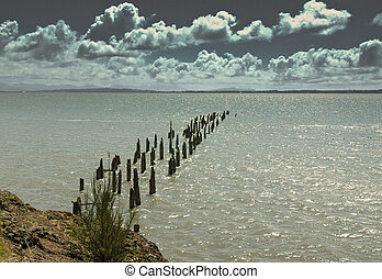 Pilings - Wood pilings along the coast at Cape...