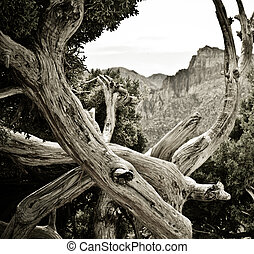 Widerness - Tree at Red Rocks wilderness area outside of Las...