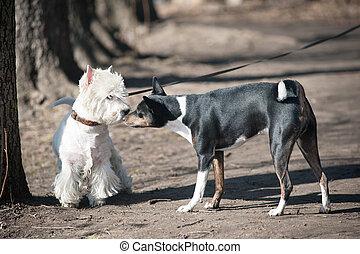 dos, Perros, charla