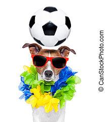 Brasil, ENGRAÇADO, futebol, cão