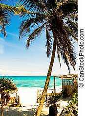 Beach Scene - Palm tree on a white sand beach on the Riviera...