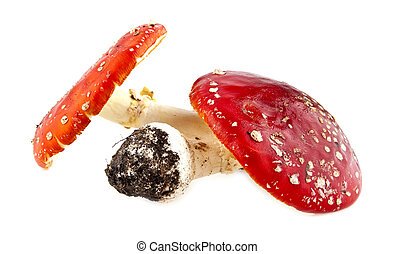 fly-agaric isolated on a white background