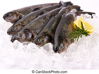 Five fresh rainbow trout with lemon on ice, close up