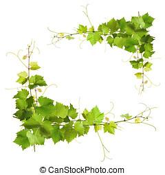csokor, zöld, Szőlőtőke, zöld, szőlő,...