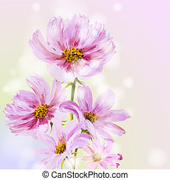 Cosmos flowers background. Spring flowers invitation...