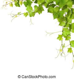 kollázs, Szőlőtőke, zöld