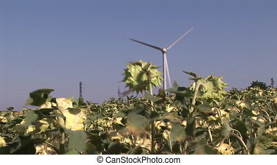 Wind-Turbine - Wind Turbine in a field of Sunflowers