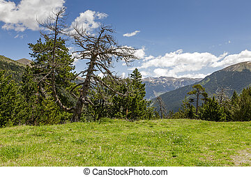 Nature of the Pyrenees