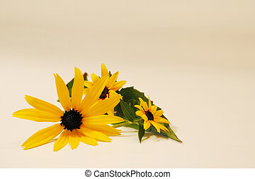 Black-Eyed-Susans - A cluster of delicate yellow...