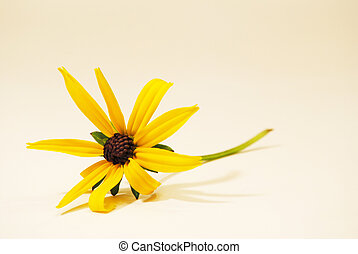 Black-Eyed-Susan - A single delicate stem of a...