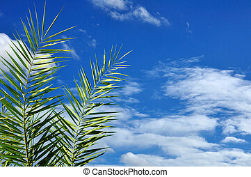 Beautiful leaves of palm trees with blue sky