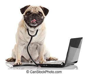 Pug dog with stethoscope and laptop