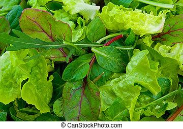misturado, salada, verdes