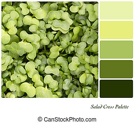 Salad cress palette - A background of fresh salad cress in a...