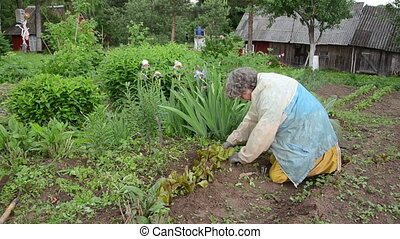 garden work senior - old woman with workwear rain carefully...
