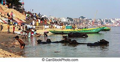 buffalos and ghats Varanasi - VARANASI, INDIA - 5th of...